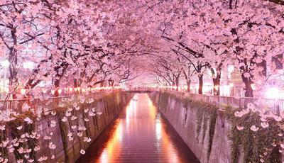 15 lugares surpreendentes para observar as cerejeiras em flor