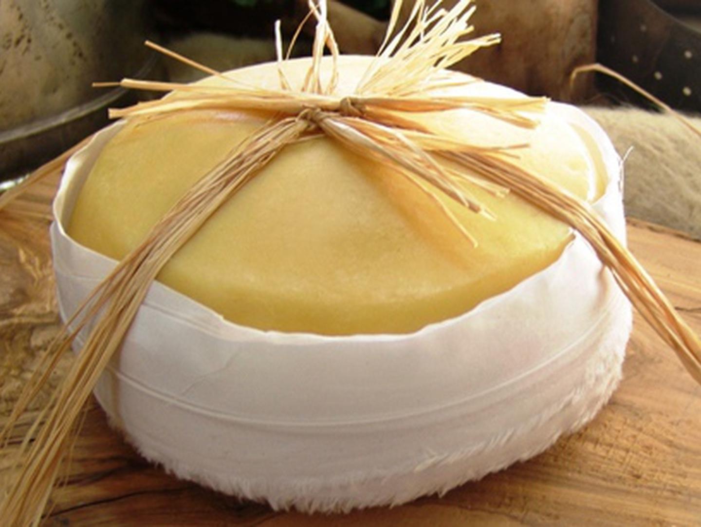Serra da Estrela: as ovelhas podem não chegar para o queijo