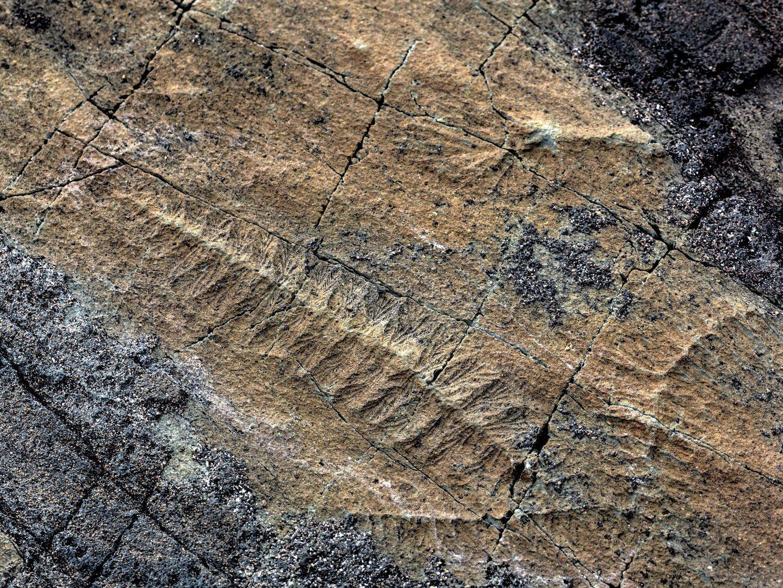 Descobertos fósseis dos mais antigos do mundo com 3,77 mil milhões de anos