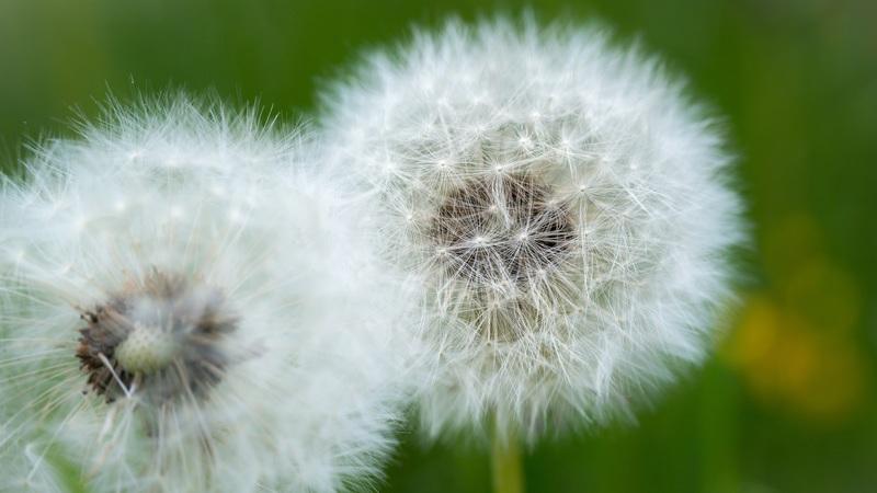 10 conselhos para evitar os sintomas das alergias