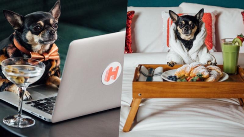 Site procura cão para ser crítico de hotéis. E o dono acompanha-o
