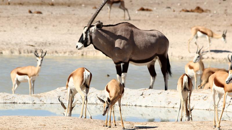 """O Parque Nacional de Etosha, na Namíbia, é uma """"passerelle"""" de vida selvagem"""