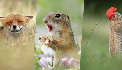 Este fotógrafo austríaco dedica-se a fotografar a vida selvagem. O resultado são imagens muito divertidas