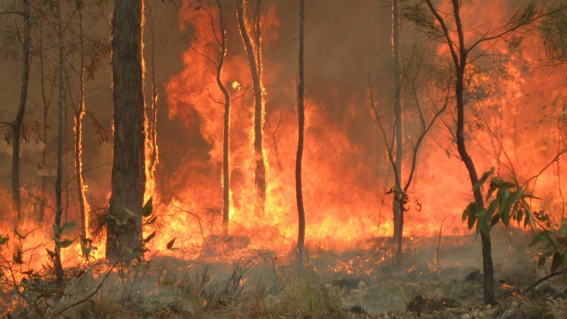 """Europa corre """"risco elevado"""" de incêndios em 2020, alerta comissário de gestão de crises da UE"""