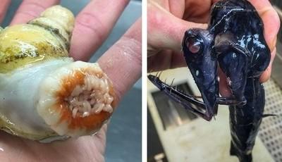 O singular e desconcertante mundo marinho partilhado por um pescador russo