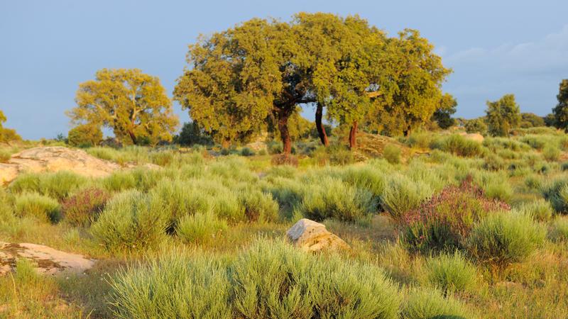 Entre as escarpas graníticas do Côa: À descoberta da Reserva da Faia Brava