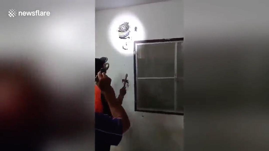 Morador descobre cobra píton de 5 metros na parede da sua casa