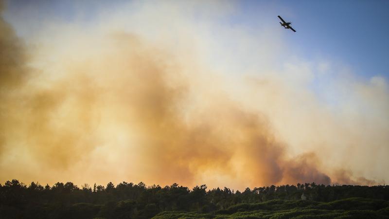 """O que se faz para prevenir incêndios? Investigador diz que Portugal """"tem uma cara diferente"""" na limpeza das áreas"""