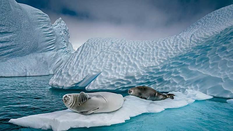 Antárctida: como o aquecimento está a mudar o que os animais comem, onde descansam e se reproduzem
