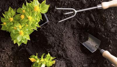 Plantas (mais) saudáveis durante o descanso
