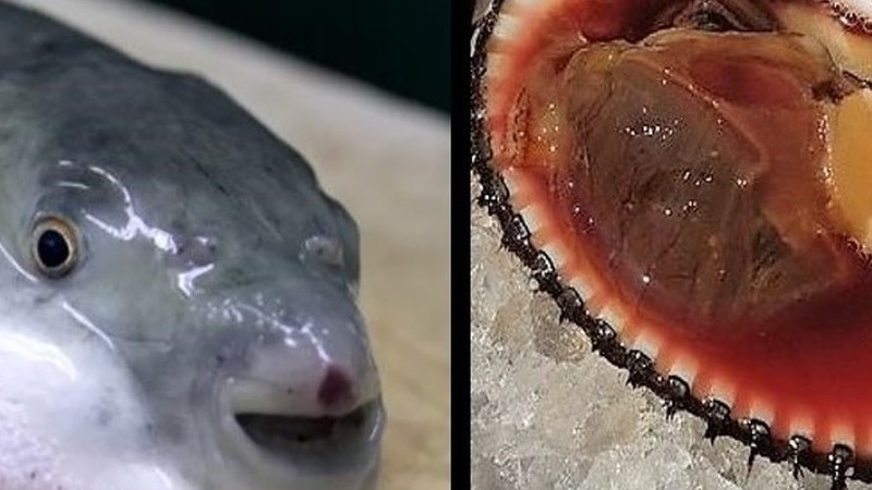 Da Amêijoa de Sangue ao Peixe Balão, 9 alimentos potencialmente mortais que vão à mesa
