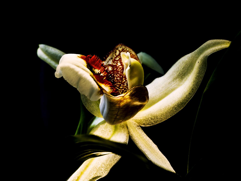 Veja as orquídeas do senhor Pekka. As flores que trouxeram umfinlandês à estufa de Luís I