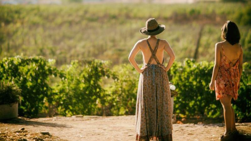 Destinos para quem gosta de apreciar um bom vinho
