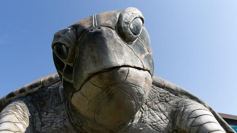 Tartarugas gigantes: já só existem em dois lugares do mundo
