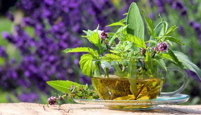 3 plantas do tempo frio que fazem bem à saúde