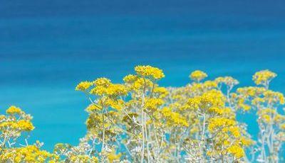 As 10 plantas que causam mais alergias