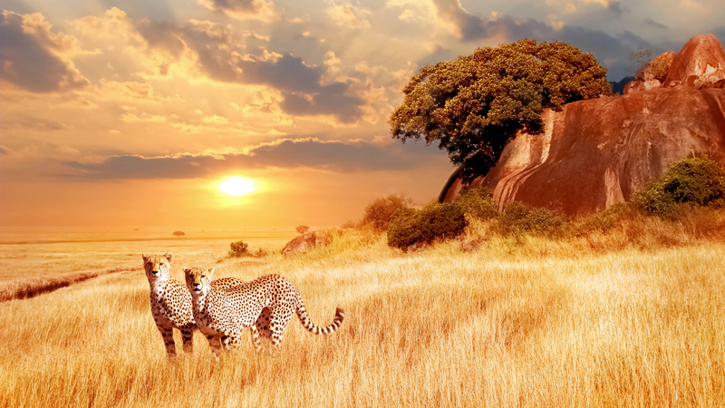 35 experiências únicas com as cores e os aromas do continente africano