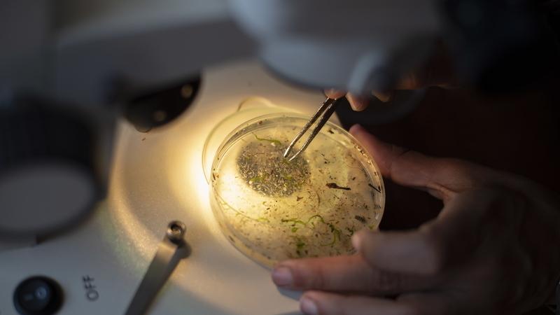O problema cresce, mas os riscos para a saúde devido aos microplásticos na água ainda são baixos