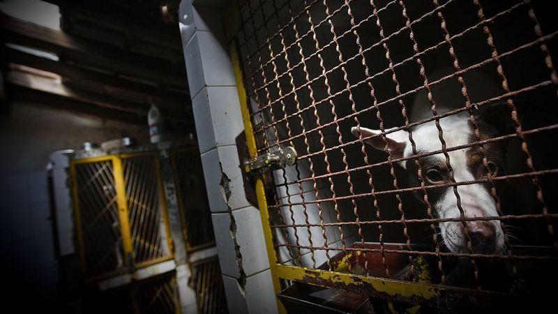 Lisboa: Sete cães resgatados pela PSP por crimes de maus tratos
