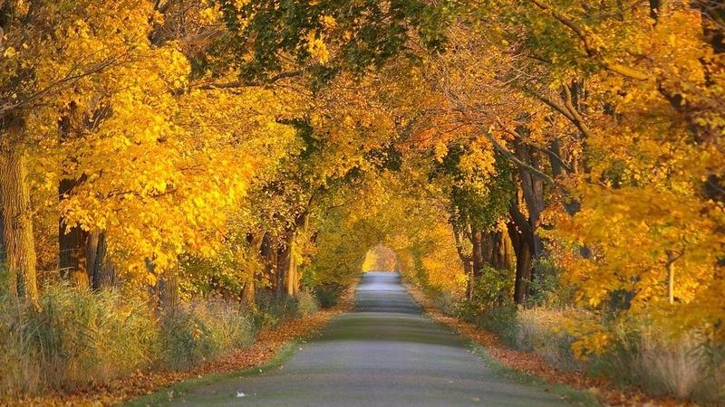 Não fique em casa neste outono. Temos 10 ótimos motivos para ir passear