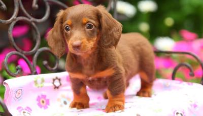 The Pet Collective: O kanal de animais mais fofo de sempre