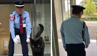 No Japão, há dois gatos que tentam entrar no mesmo museu há dois anos