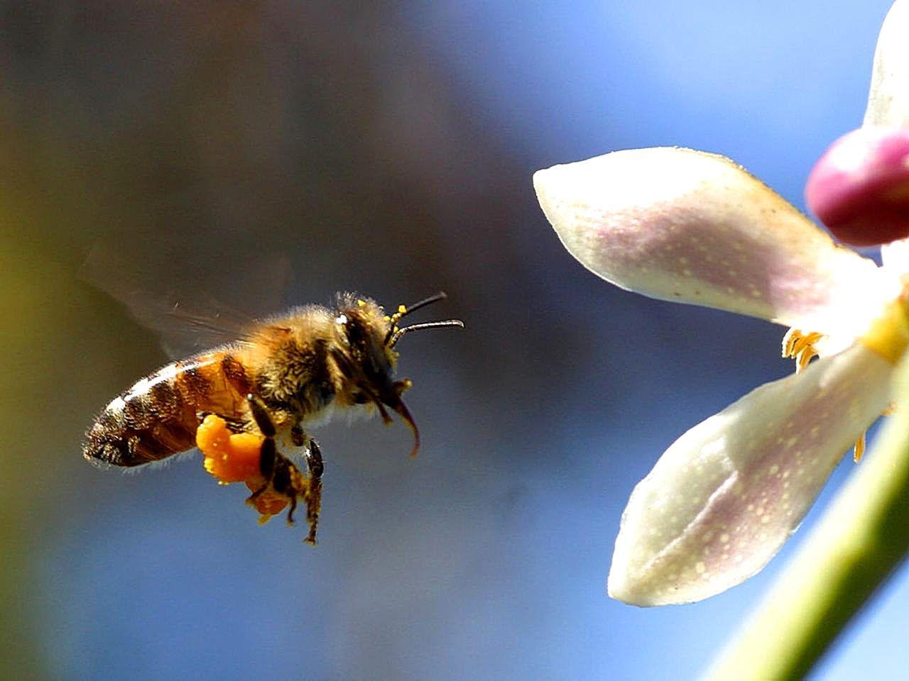 Salvemos as abelhas com a ajuda da Comissão Europeia… e com um milhão de apoiantes