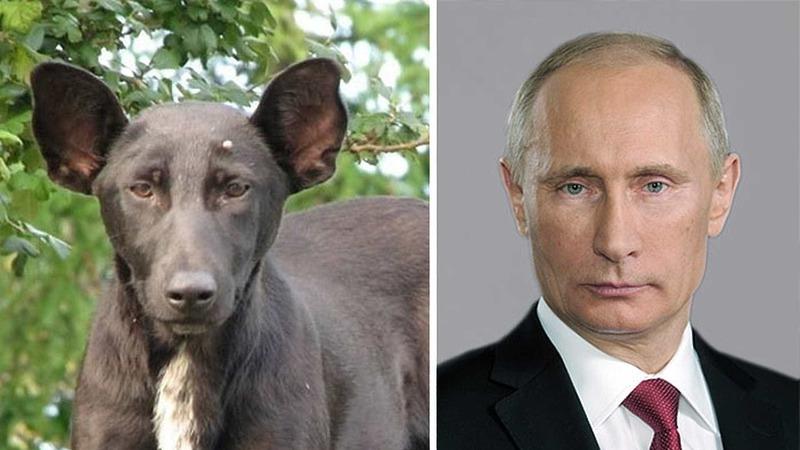 30 fotos de animais que ficaram parecidos com famosos