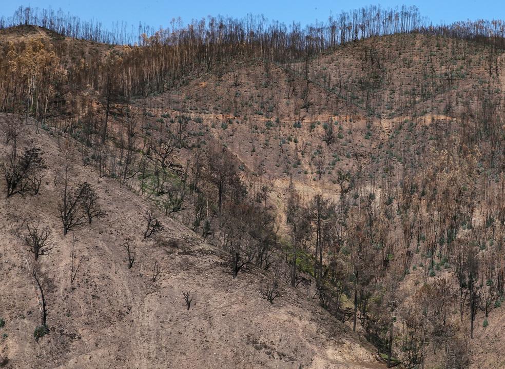Mais de 9500 hectares arderam em Vila de Rei e Mação. É aproximadamente a área de Lisboa