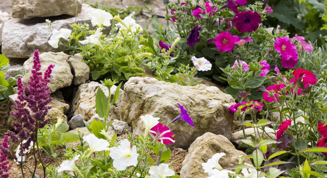 Jardim de rochas para um verão (ainda) mais florido