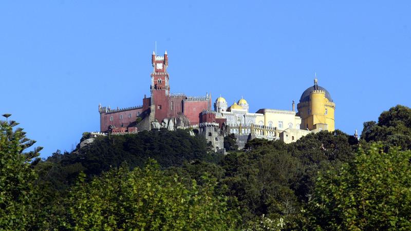 Parque da Pena em Sintra reabre quarta-feira após eliminação das vespas asiáticas