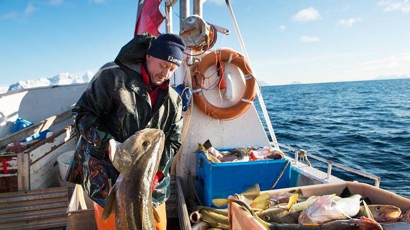 Erro da Segurança Social tira anos de reforma a centenas de pescadores