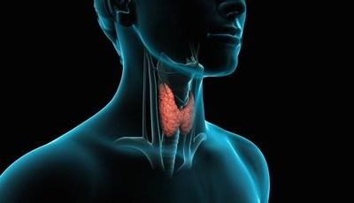 Qual o papel da tiroide no organismo?