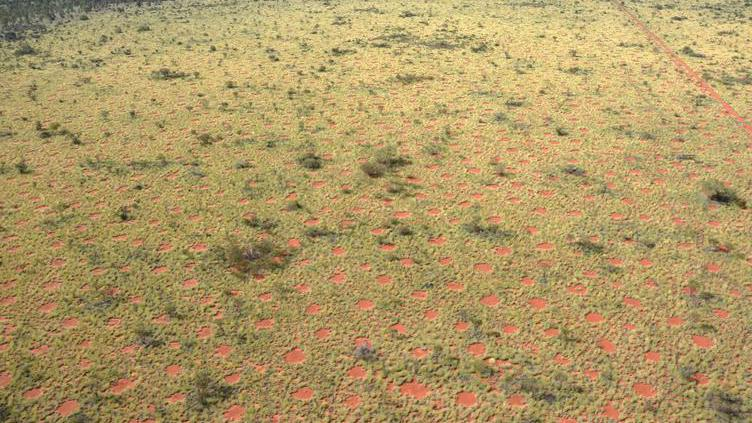 Anéis de fada no deserto australiano