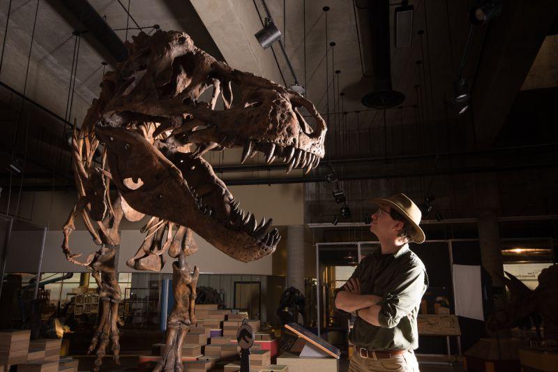 O maior Tiranossauro Rex do mundo vai ser exposto a partir de maio no Canadá