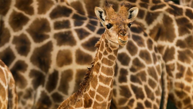 180 países reunidos em Genebra para debater mais proteção para espécies vulneráveis
