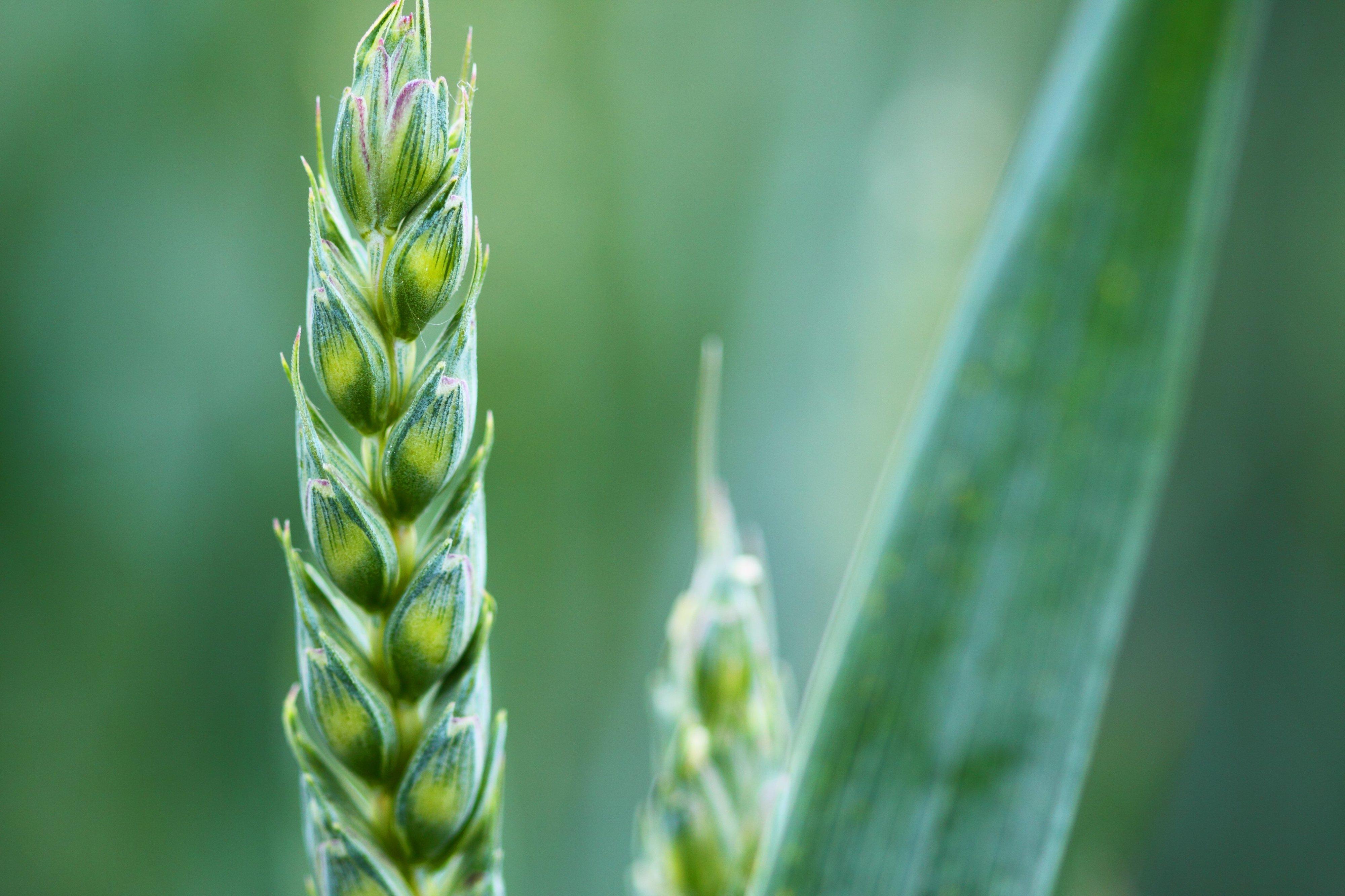 """Portugal envia sementes de milho, feijão e trigo para """"arca de Noé"""" na Noruega"""