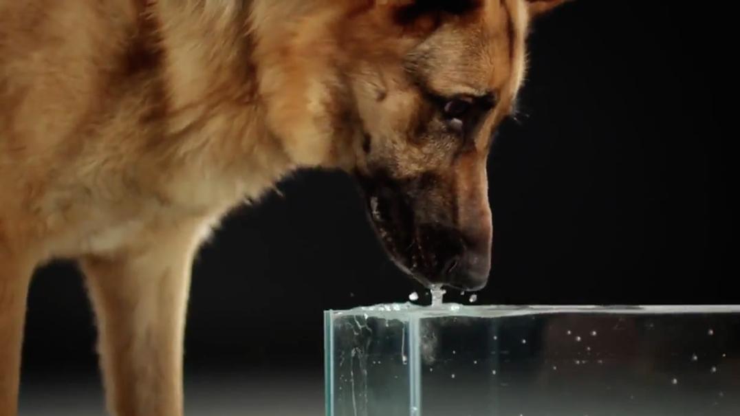 Slow motion demonstra como os cães bebem água