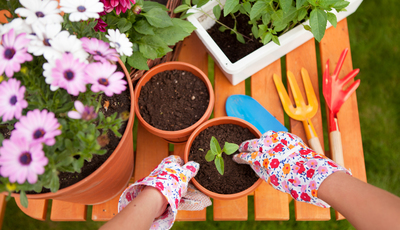 Calendário de sementeiras para o início da primavera