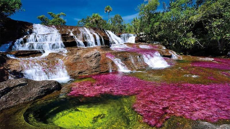 Caño Cristales, um rio que fugiu do Paraíso