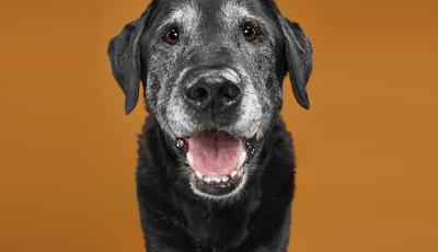 São apaixonados por cães e estão fartos de ganhar prémios com as fotografias que lhes tiram