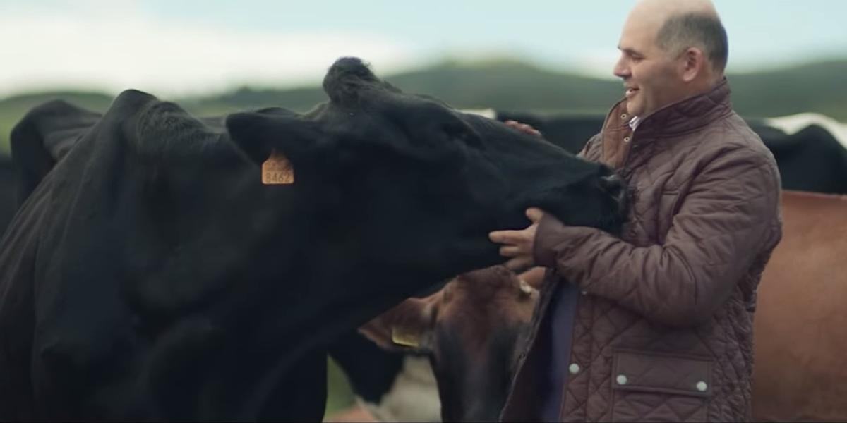 Vacas felizes