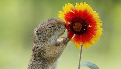 É apaixonado por roedores, fotografa-os como ninguém e até já ganhou prémios