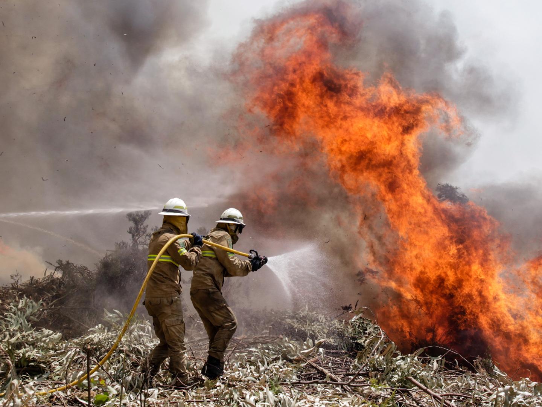 GNR registou este ano mais de 650 multas relacionadas com proteção das florestas