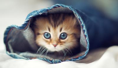 Se gosta de gatos, encontra aqui os vídeos mais engraçados destes amiguinhos