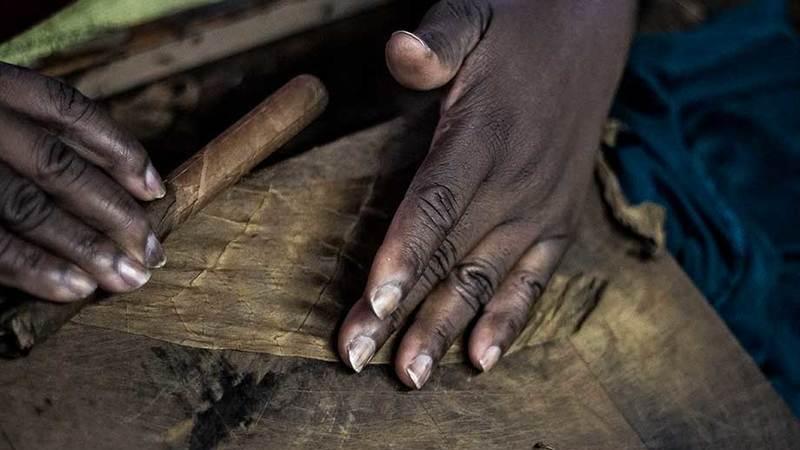 Charutos baianos, um tabaco com História