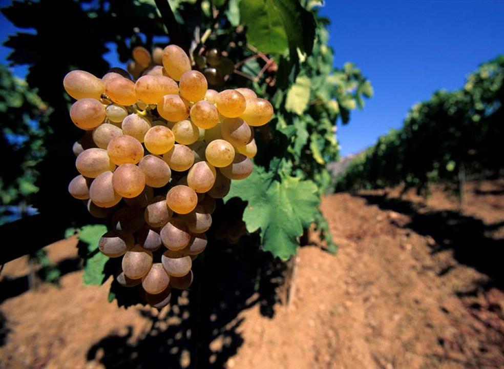 Os 10 maiores mitos do mundo dos vinhos