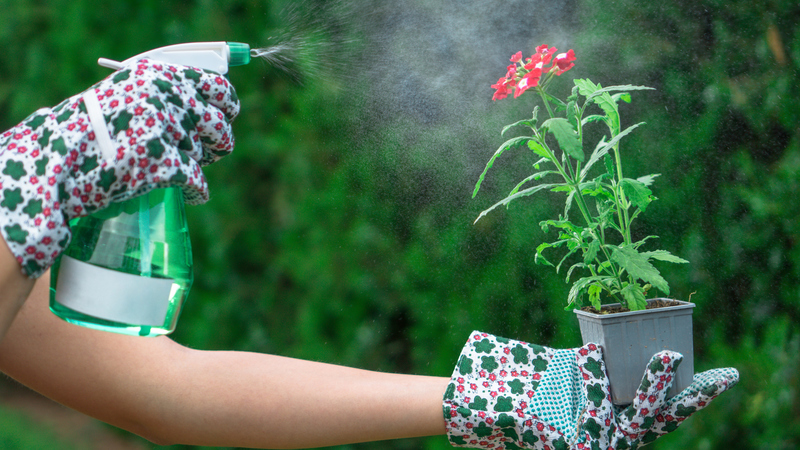 Há vantagens em utilizar vinagre nas plantas? As explicações de uma especialista