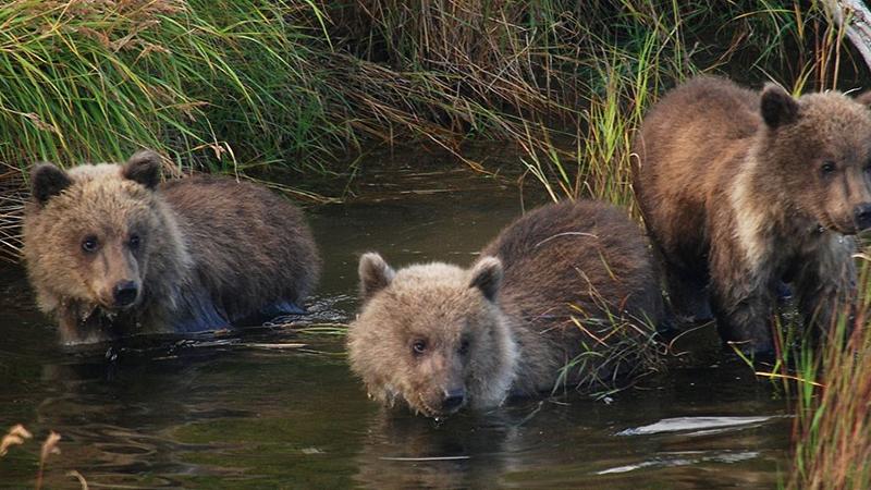 Sexta extinção em massa de animais selvagens está a acelerar e a culpa é dos humanos