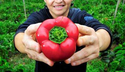 Alimentação sustentável: Nove gestos que mudam o nosso estilo de vida, cuidando do planeta